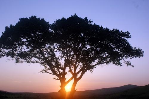 Sundown, Africa style.