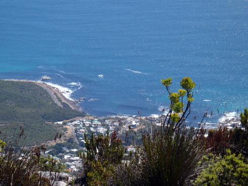 The Atlantic Ocean from Table Mtn.
