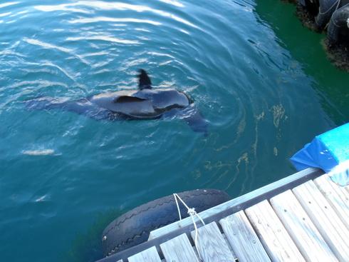 Little dockside marine life.