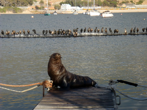He final flops onto the dock. Same way I used to climb ice falls. With difficulty.