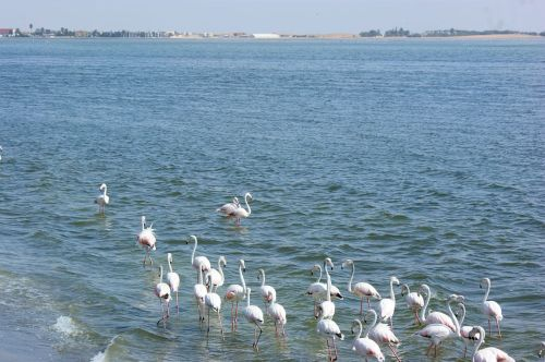 A lot of flamingos. If you saw this in Canada it would mean someone was having a 60th birthday party.