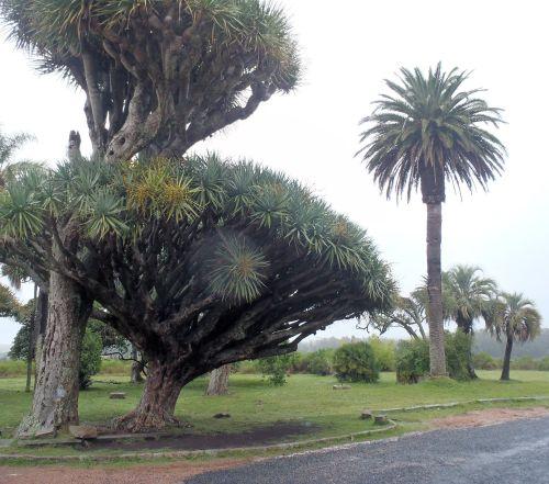 Don Piria liked his trees.